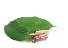Pills Capsules Bio and green leaf Royalty Free Stock Images
