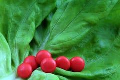 Pills on lettuce leaf Stock Images