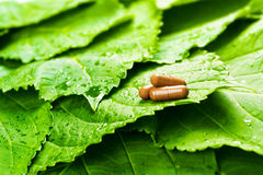 Pills over green leaves Stock Photos