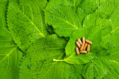 Pills over green leaves. Homeopathic medicine Royalty Free Stock Images