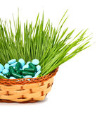 Pills, tablets and wheat grass in the basket Royalty Free Stock Image