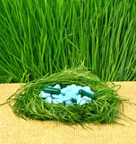 Pills, tablets and wheat grass in the nest Royalty Free Stock Photos
