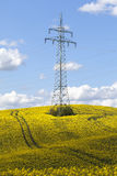 Pilon - pole canola Fotografia Stock