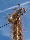 Pilone del palo della luce della colonna di elettricità Immagine Stock