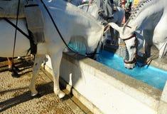 Pilone per i cavalli, Spagna dell'acqua Immagini Stock Libere da Diritti
