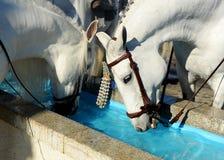 Pilone per i cavalli, Spagna dell'acqua Fotografia Stock Libera da Diritti