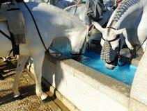 Pilone per i cavalli, Spagna dell'acqua Fotografia Stock
