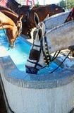 Pilone per i cavalli, Spagna dell'acqua Immagini Stock