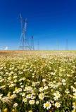 Pilones de la electricidad en un campo de flores imagen de archivo libre de regalías