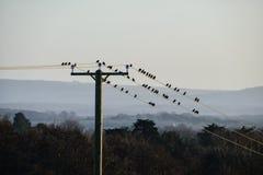 Pilones y pájaros del teléfono Imagenes de archivo