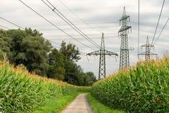 Piloni di elettricità e del campo di grano con i cavi fotografia stock