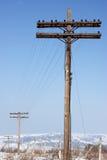 Piloni di legno antichi del telegrafo Immagini Stock Libere da Diritti