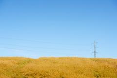 Piloni su un campo giallo Fotografia Stock