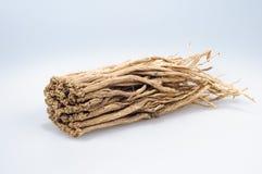 Pilosula di Codonopsis (Franch.) Nannf. Fotografia Stock