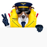 Pilot dog. Pilot captain dog wearing emergency life vest behind a placard with peace fingers stock images