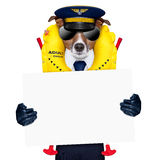 Pilot dog. Pilot captain dog wearing emergency life vest holding a placard stock image
