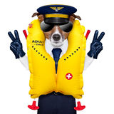 Pilot dog. Pilot captain dog wearing emergency life vest with peace fingers stock images