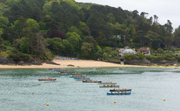 Free Pilot Gig Racing Rowing Event At Salcombe Devon England Uk On Sunday 31st May 2015 Royalty Free Stock Photography - 54881307