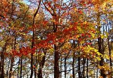 Pilot Mountain State Park Royaltyfria Bilder