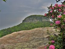 Pilot Mountain State Park Pinnacle. A rocky ledge overlooks the pinnacle as rhododendron bloom at Pilot Mountain State Park in North Carolina royalty free stock photos