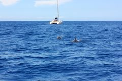 Fins of pilot whales and a small boat royalty free stock photos