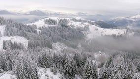 Pilotando intorno all'i bei alberi stessi congelati Racconto di inverno Paesaggio da ammirare video d archivio