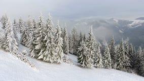 Pilotando intorno all'i bei alberi stessi congelati Racconto di inverno Paesaggio da ammirare archivi video