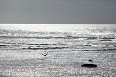 Piloter l'oiseau est éclairé à contre-jour au-dessus de l'océan et de l'eau de scintillement Photographie stock
