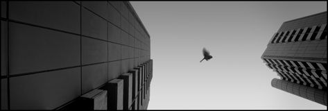 Pilotez mon oiseau Photos libres de droits