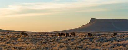 Piloto Butte, Wyoming Fotos de archivo
