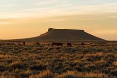 Pilotowy Butte, Wyoming zdjęcia stock