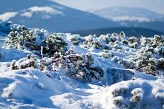 Pilsko, Poland. Winter on the Pilsko ( Poland ) mountain Stock Photos