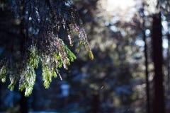 Pilsko, Poland. Winter on the Pilsko ( Poland ) mountain Royalty Free Stock Photos