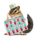 Pilules drôles de prise de tamia d'animal familier, chapeau vétérinaire habillé, sur le petit morceau Photos libres de droits