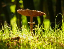 pilz Stockfotos