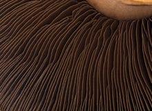 Pilz stockbild