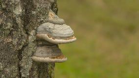 Pilz auf Baum Lizenzfreie Stockfotos