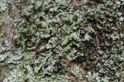 Pilz auf Baum Stockbilder