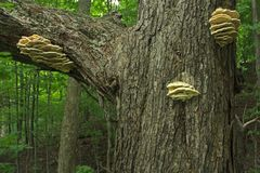 Pilz auf Baum im Wald Stockbild