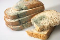 Pilz auf Brot lizenzfreie stockfotos