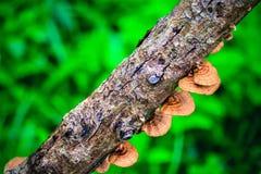 Pilz auf dem Bauholz stockfoto