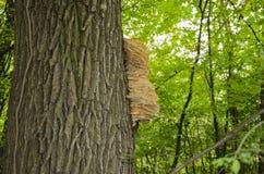 Pilz auf dem Baum Stockfotografie