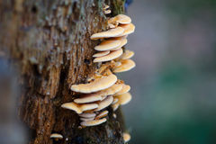 Pilz auf dem Baum lizenzfreies stockfoto