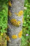 Pilz auf dem Baumstamm Stockbilder