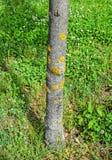 Pilz auf dem Baumstamm Stockbild