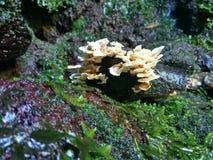 Pilz auf dem Felsen stockfotos