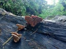 Pilz auf dem Holz Lizenzfreie Stockfotografie