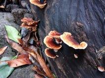 Pilz auf dem Holz stockfotografie