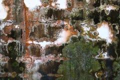 Pilz auf dem Wandhintergrund Lizenzfreie Stockfotos