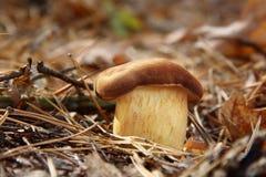 Pilz auf der Erde Lizenzfreies Stockbild